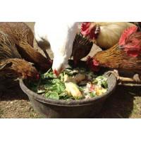 Чем нужно кормить несушек для высокой продуктивности?