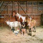 Домашнее животноводство. Купить или построить скотный двор.